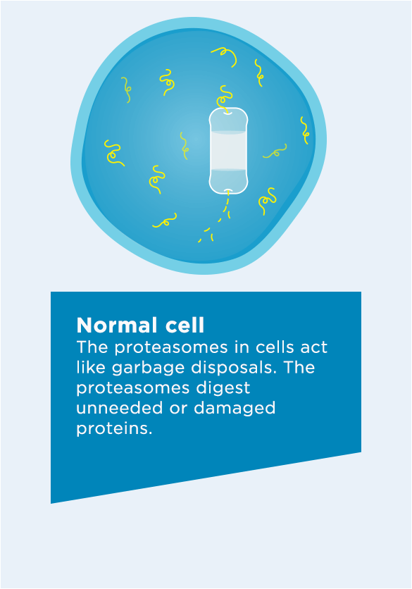 The proteasomes in cells act like garbage disposals. The proteasomes digest unneeded or damaged proteins